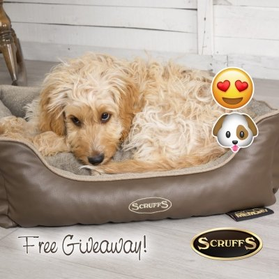 Win A Chateau Memory Foam Box Bed from Scruffs