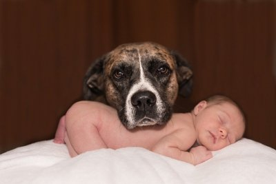 Introducing your dog to a new baby.
