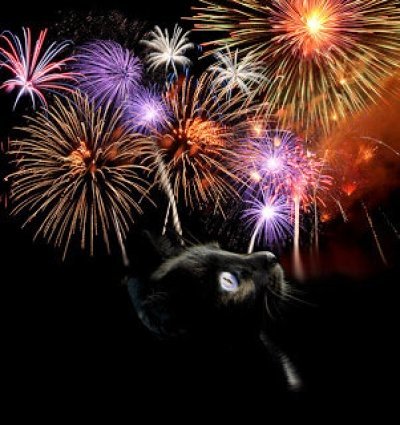 Keeping your pet safe on Bonfire Night
