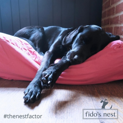Win A Fido's Nest Luxury Bed Worth Up to £85