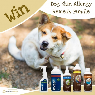 Win A Dog Skin Allergy Bundle from Ingenious Probiotics