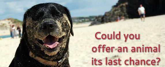 Last Chance Dog Home Cornwall