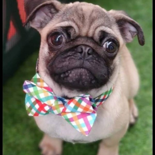 dog collars ollie & co