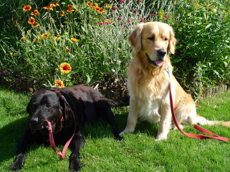 Two of our Doggie Guests Jake and Benson