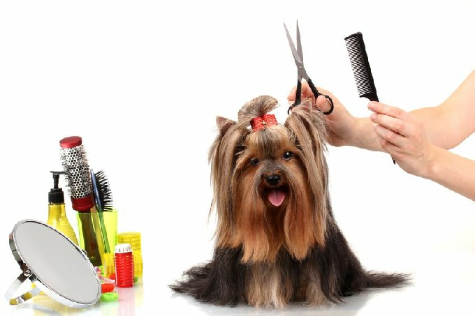 Top Coat Mobile Dog Groomers - Hove, East Sussex