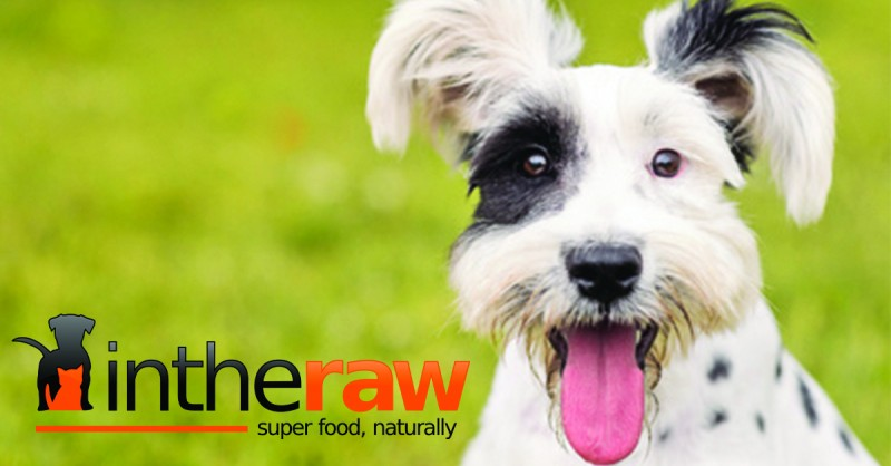 In The Raw - Online Raw Cat & Dog Food Store