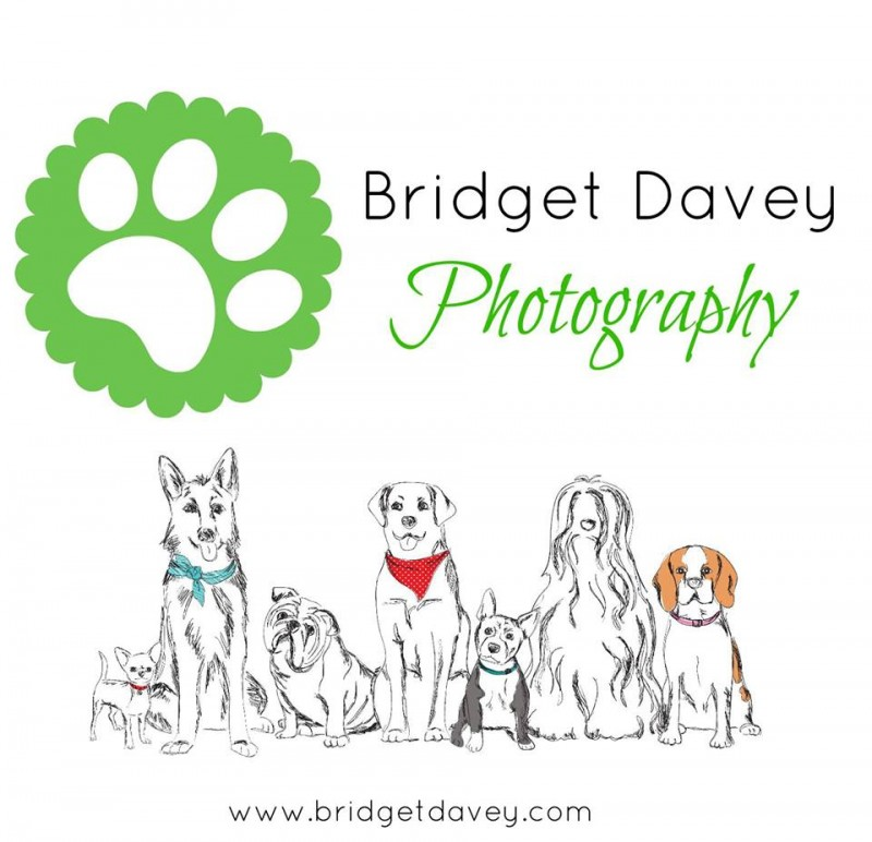 Bridget Davey Profile Pic