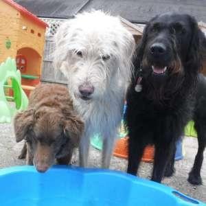 Happi Days Dog Day Care Martlesham
