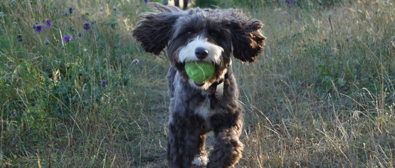 My Best Friend (Dog Walker) New Forest