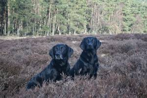 Country Canines - Banchory, Aberdeen