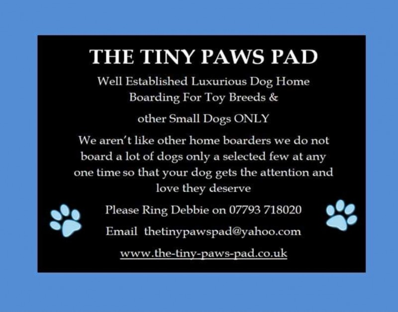The Tiny Paws Pad - Cheshire