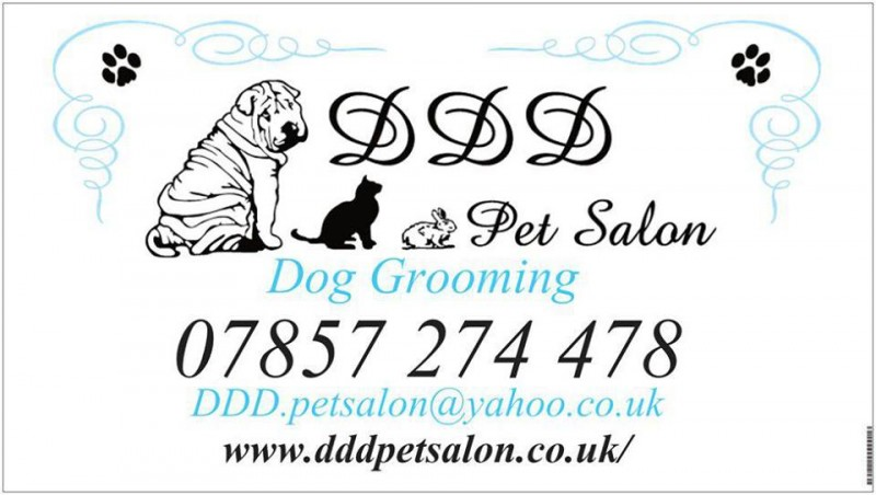 ddd pet salon   dog grooming   brighton