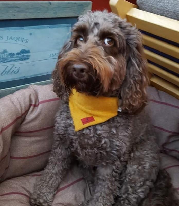Ollie & Co Dog Shampoo and collars