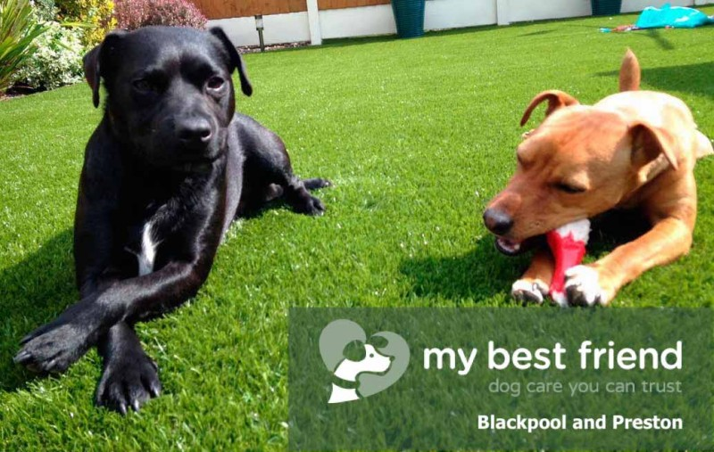 My Best Friend (Dog Walker) Blackpool and Preston