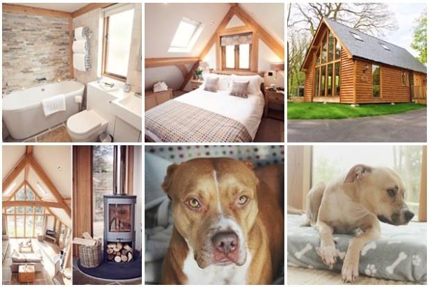 Dog Day Care Brecon