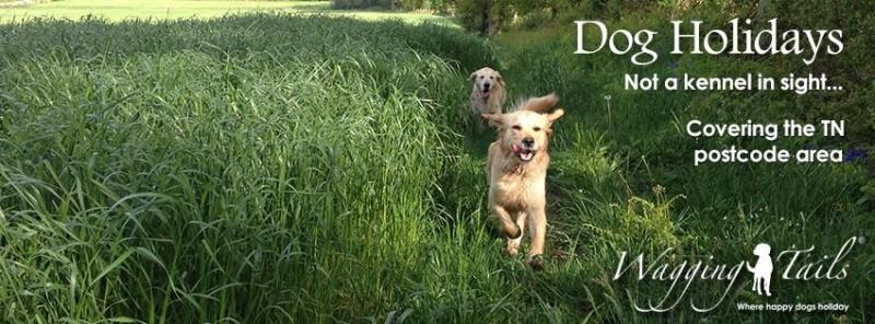 Wagging Tails Tonbridge - Dog Sitting | Home Boarding