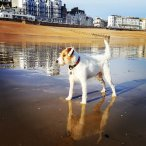 St Leonards & Hastings Dog walkers