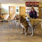 Pet Waiting room (154).jpg