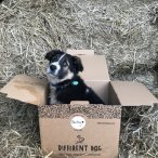 different dog dog in box