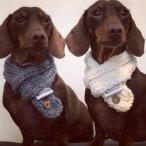 Louis & Vinnie scarves
