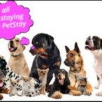 Group of dogs who love to stay with PetStay