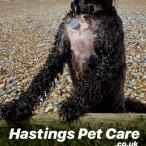 Hastings Pet Care - Dog Walking & Cat Feeding | East Sussex
