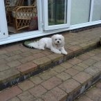 PetStay Home Dog Boarding & Dog Sitting UK