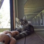 small-cat.jpg