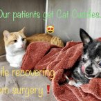 Veterinary surgery and chemotherapy
