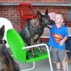 dog+kennels+near+me.jpg
