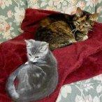 ? Paoli Vetcare loves cats!