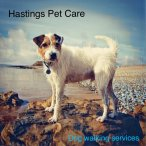 Hastings and St Leonards Dog walkers
