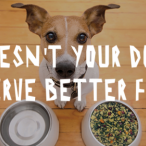 Doesn't your dog deserve better food?