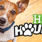 Heli Hounds Dog Walk Day - Coggeshall, Essex