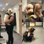 Bury St Edmunds Veterinary Centre