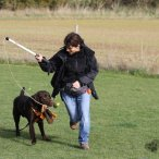 Top Dog Hertfordshire Training School