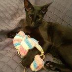 Cat Candy & Hugo