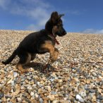 Prince St Leonards Dog Walker - Hastings & Fairlight.JPG