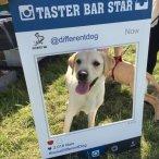Taster Bar Star Different Dog