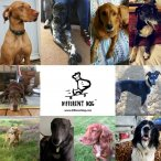 different dog collage