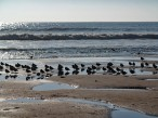 Birds on the Beach at Le Phare