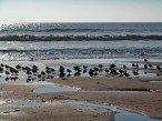 Birds on the Beach at Le Phare