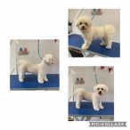 Kings Pet Services   Dog Grooming   Canterbury