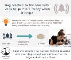 SpiritDog Training | Reactive dog - doorbell