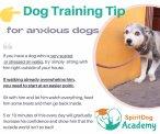 SpiritDog Training -| Anxious dog