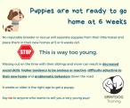 SpiritDog Training | 6 weeks is too young