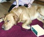 Animal Physiotherapy - Bracknell, Berkshire & Swindon, Wiltshire