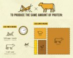 Insect vs. animal protein - facts and figures