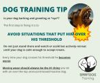 SpiritDog Training | Avoid Stress