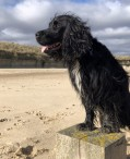Client Review 2020 | East Ruston Cottages - Dog Friendly, Self Catering Holidays in Norfolk